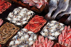 fish-market-02
